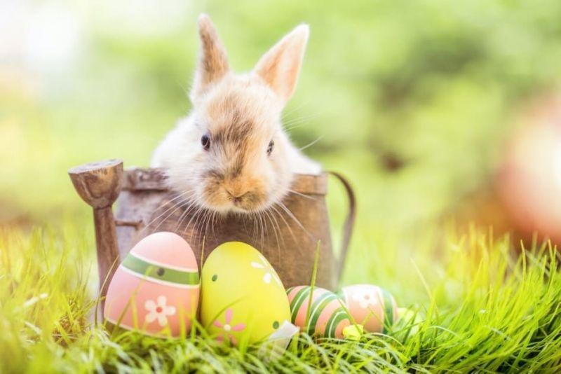 4 tipp a csodálatos húsvéti dekorációra
