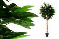 Műnövény - Mangófa 180 cm