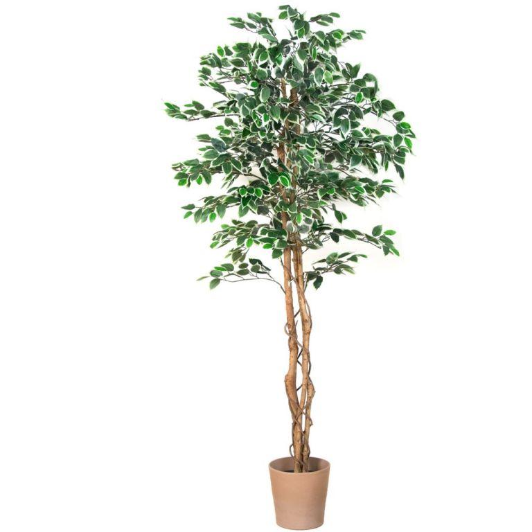 Műnövény - Fikusz 190 cm