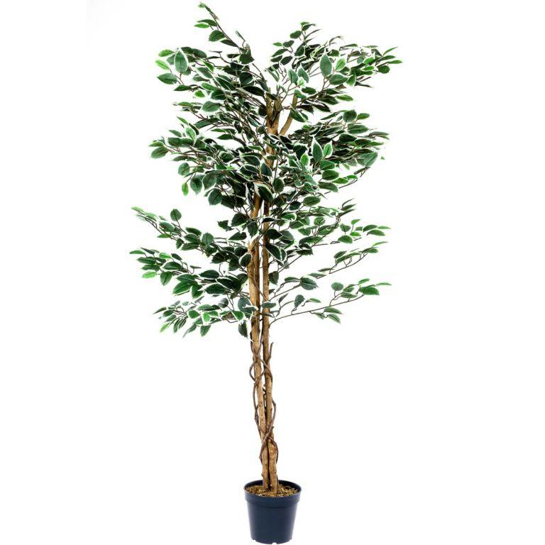 Műnövény - Fikusz 160 cm